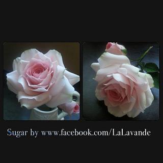 A Sugar Rose