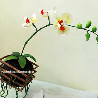 Moth Orchid Gravity Cake