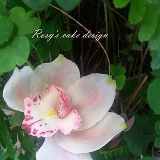 My Cymbidium orchid