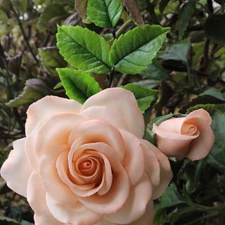 Garden Peach Rose