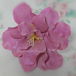 Double Camellia in sugar paste