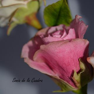 Sugar Rose..