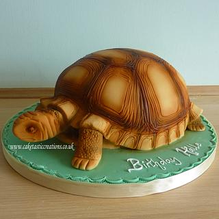 Shelley the Tortoise Cake