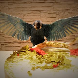 sugar parrot cake