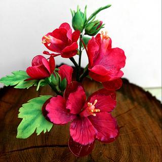 crystalline hibiscus ,drip  cake