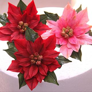 Poinsettias Love
