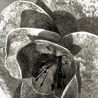 Stone rose (work in progress...) - Cake by Clara