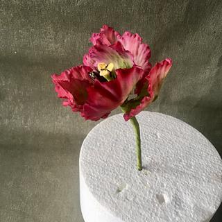 Gum Paste Tulip