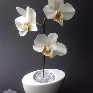 Flower paste Moth Orchid