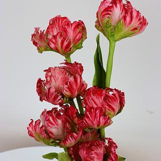 Tri-colours Tulips