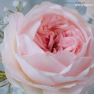 Wafer Paper English Roses