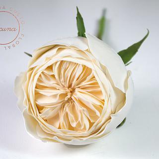 Rosa Davis Austin en Azúcar - David Austin Rose Gumpaste - Cake by Yolanda Cueto - Yocuna Floral Artist