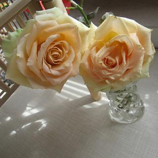Apricot sugar rose