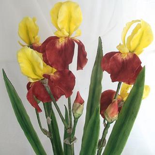 beared iris