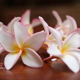 Sugar Frangipani - Cake by Sweet Symphony