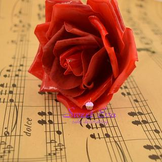 My red rose