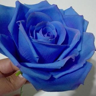 Rosa Azul - Cake by Erica Förster