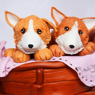 Corgi puppies in a Basket
