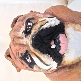 Buddha the bulldog