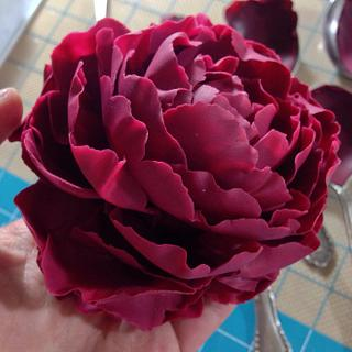 Sugar peony for tutorial