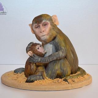 Rhesus Macaque - Animal Rights Collaboration