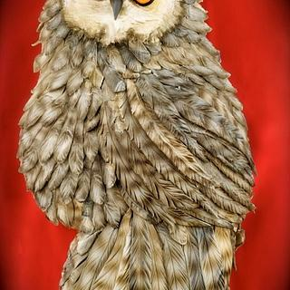 2D owl