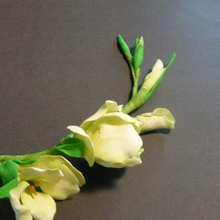 2nd glad ! white glads tinted with pale green petal dust