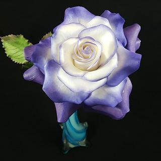 Single Rose in Violet-White