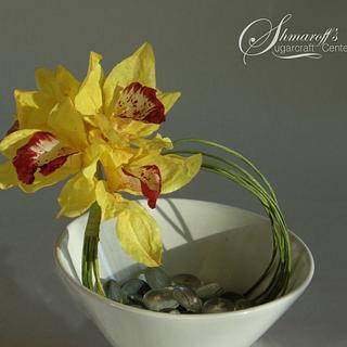 Wafer paper Cymbidium Orchid