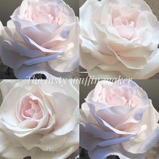 White 0'Hara rose  - Cake by Andrea