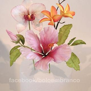 Tropical flowers - Hibiscus, Plumeria, Orchid