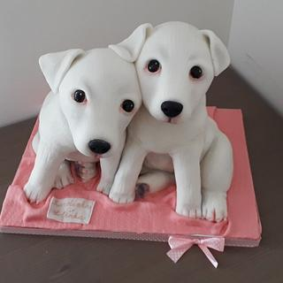 White Jack Russell Terier