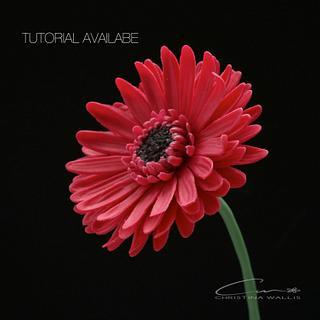 Gerbera Flower Cold Porcelain