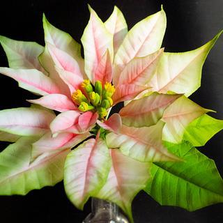 Pink poinsettia sugar flowers