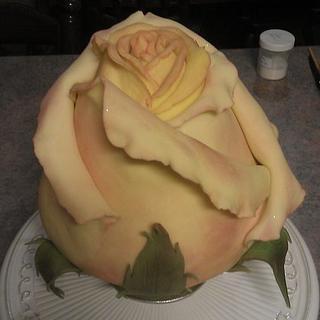 Claire's Rose