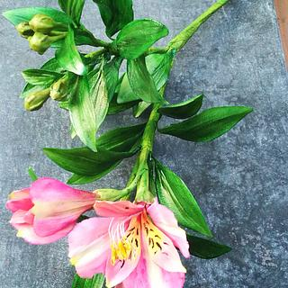 Alstroemeria plant