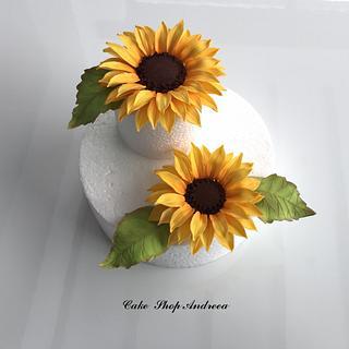 sugar sunflowers