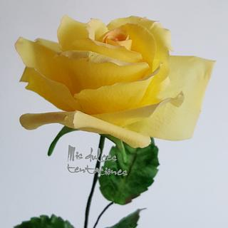Flower yellow rose