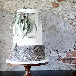 Tillandsia - Cake by Cake Heart