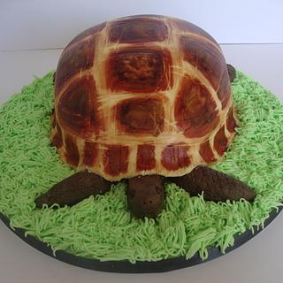 Meet Eric the tortoise.