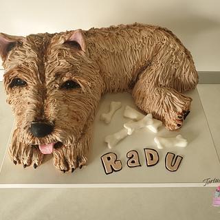 Westie dog cake.