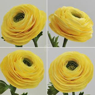 Ranunculus Collage