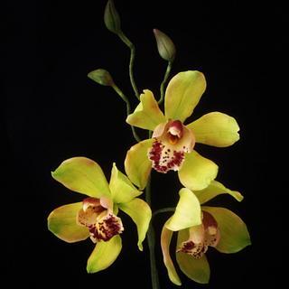 Gumpaste cymbidium orchids