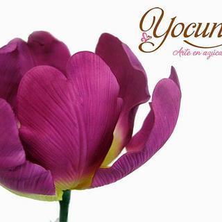 Tulipán - Tulip