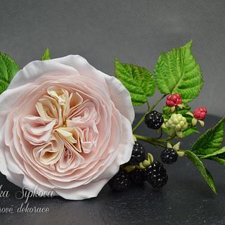 Austin Roses, raspberry, blackberry