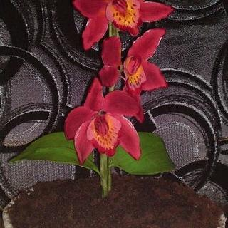 Orchid in a pot.