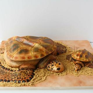 Mother and baby Sea turtles - Cake by Designer Cakes By Timilehin