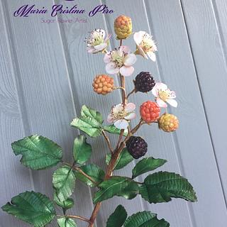 Blackberries and flowers...
