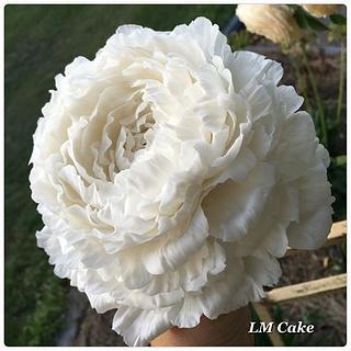 Freeform Sugar Peony rose made with love