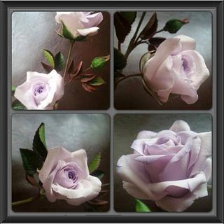 Icing Lavender climbing Rose